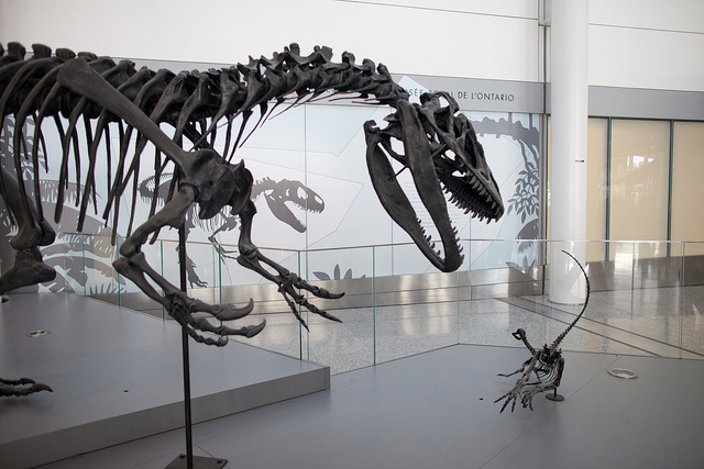 dinosaur display at Pearson - image by Flickr user Zlatko Unger - Airport Layover- Toronto Pearson International Airport